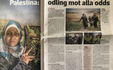 Jordbruk Palestina